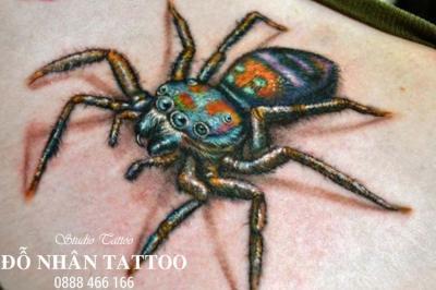 Hình xăm nhện 255